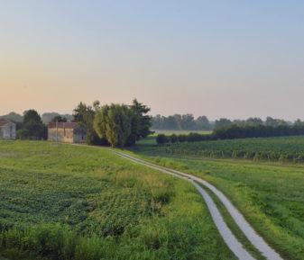 """Proteco Engineering partner del Progetto """"Venezia di Terra: il paesaggio del vino di pianura"""""""